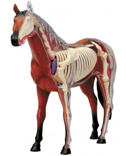 Сглобяем модел на кон Revell - Horse Anatomy Model (02099)