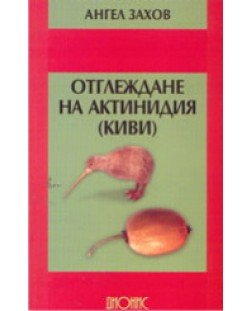 Отглеждане на актинидия (киви)