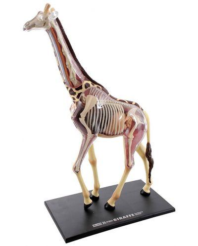 Сглобяем модел на жираф Revell - Giraffe Anatomy Model (02094) - 2