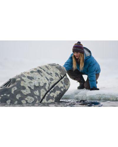 Чудо сред ледовете (DVD) - 4