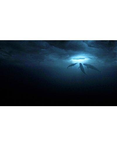 Чудо сред ледовете (DVD) - 8