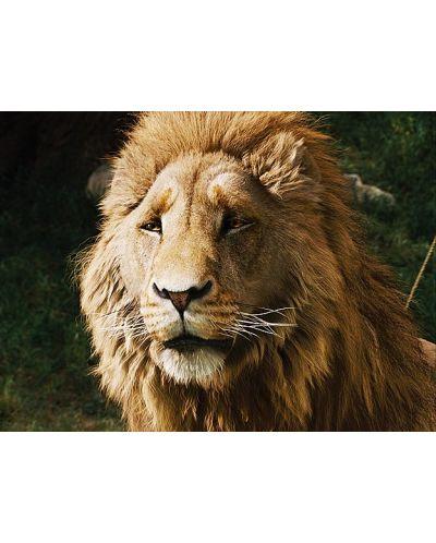 Хрониките на Нарния: Лъвът, вещицата и дрешникът (Blu-Ray) - 8