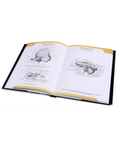 "Колекция ""Атлас по анатомия на човека"" - 6"