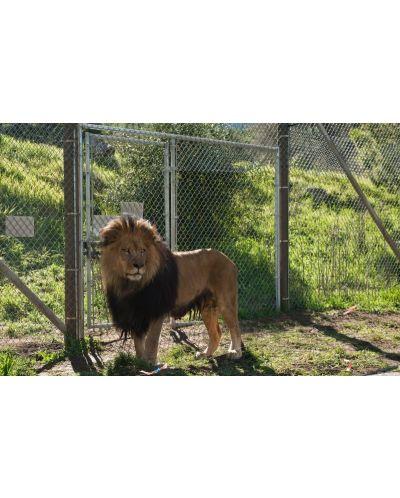 Купихме си зоопарк (DVD) - 8