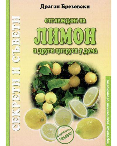 Отглеждане на лимон и други цитруси у дома - 1