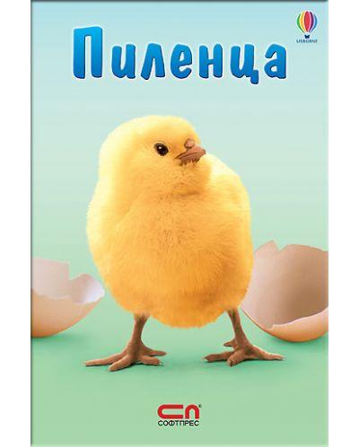 Пиленца: Малък Знайко - 1