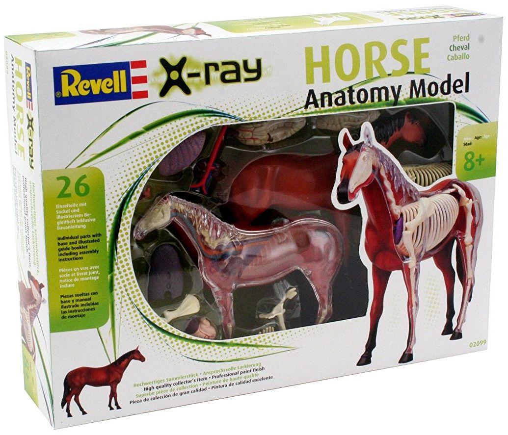Сглобяем модел на кон Revell - Horse Anatomy Model (02099) - 6