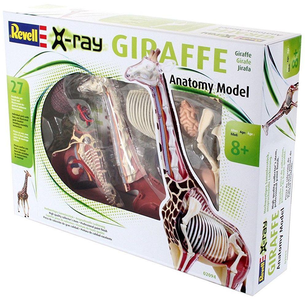 Сглобяем модел на жираф Revell - Giraffe Anatomy Model (02094) - 3
