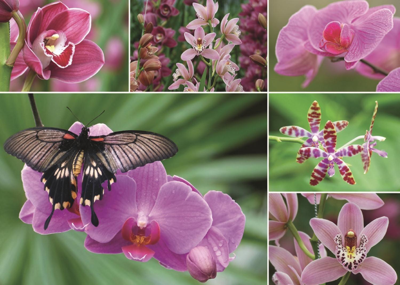 Пъзел Jumbo от 1000 части - Холандски орхидеи - 2