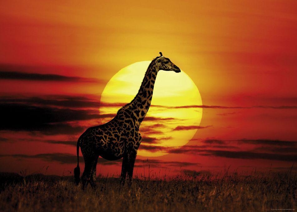 Пъзел Heye от 1000 части - Слънчев жираф, Слънчева светлина - 2