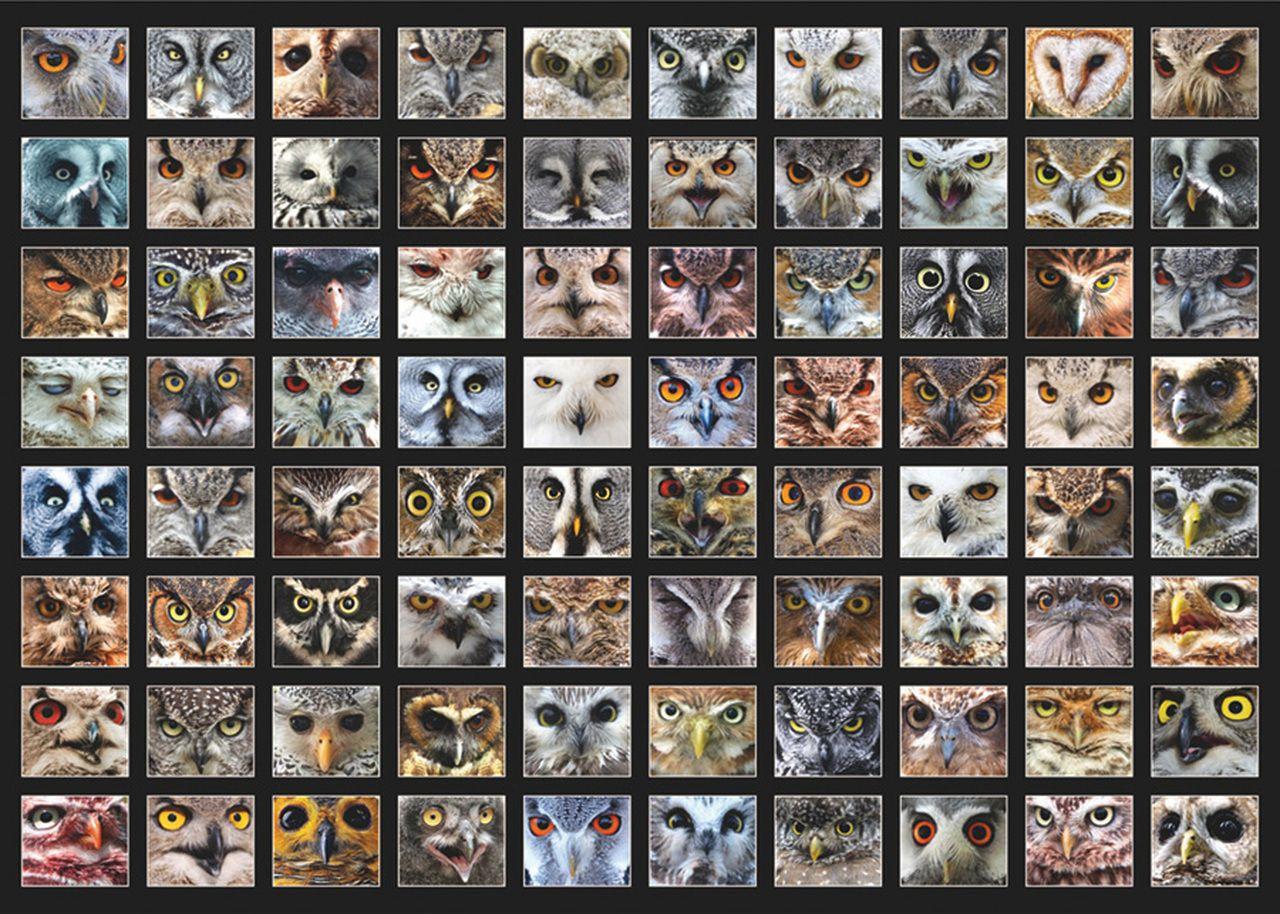 Пъзел D-Toys от 1000 части - Животински лица, Сови - 2
