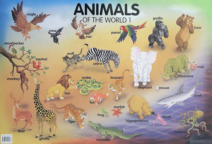 Animals of the World 1 (табло) - 1