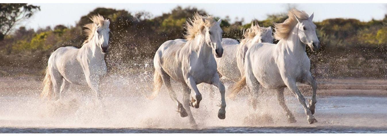 Панорамен пъзел Clementoni от 1000 части - Галопиращи коне - 2