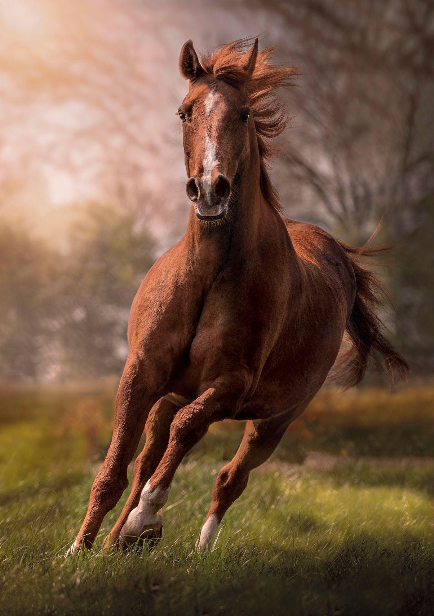 Пъзел Clementoni от 1500 части - Конят - 2