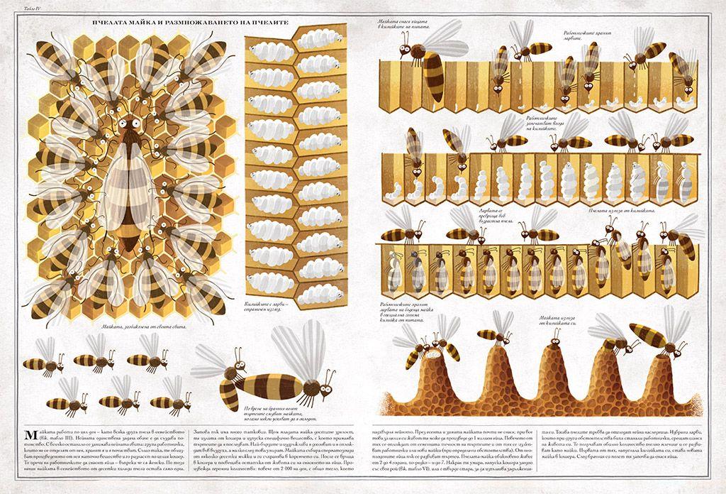 Пчелите - 2