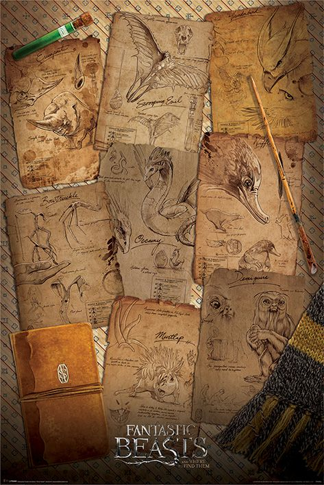 Макси плакат Pyramid - Fantastic Beasts (Notebook Pages) - 1