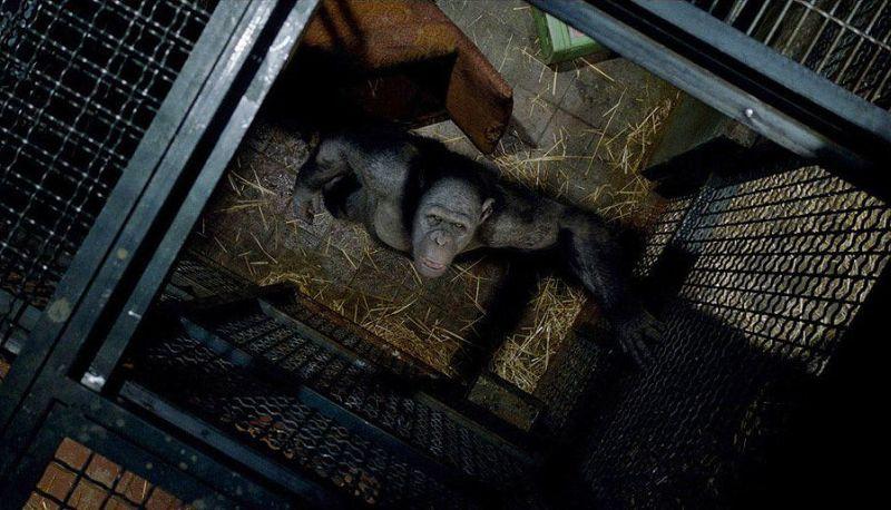 Възходът на Планетата на маймуните (DVD) - 9