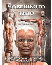 Човешкото тяло. Илюстрован атлас -1