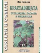 Краставицата: отглеждане, болести и неприятели