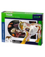 Детски комплект Kosmos -  Анатомия на тигър -1