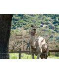 Купихме си зоопарк (DVD) - 6t